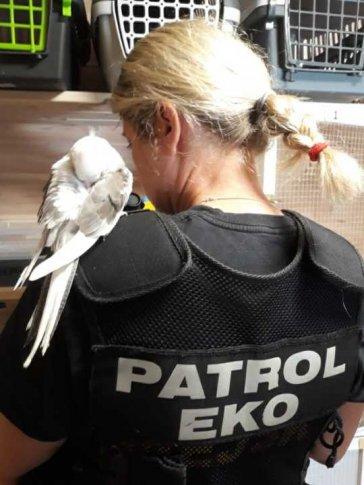 Patrol Eko z nimfą
