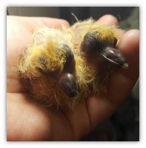 Uwaga na ptasie gniazda